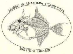 Museo di Anatomia Comparata di Roma