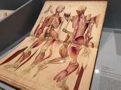 Sublimi Anatomie