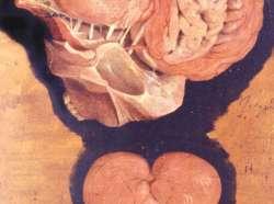Il teatro dei corpi. Le pitture colorate d'anatomia di Girolamo Fabrici d'Acquapendente